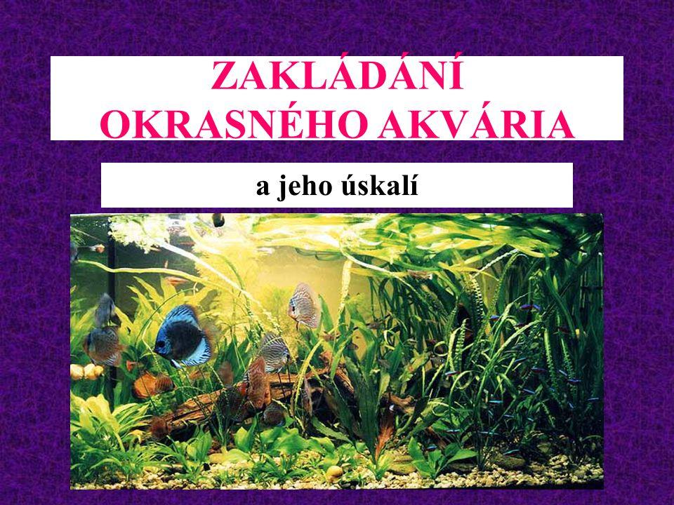 ZAKLÁDÁNÍ OKRASNÉHO AKVÁRIA a jeho úskalí