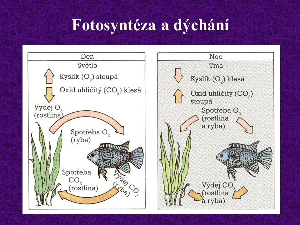 - výměnou je řešeno i nahromadění anorganických produktů mineralizace, na něž i hustě osázené porosty rostlin nemohou stačit. Množství ryb vzhledem k