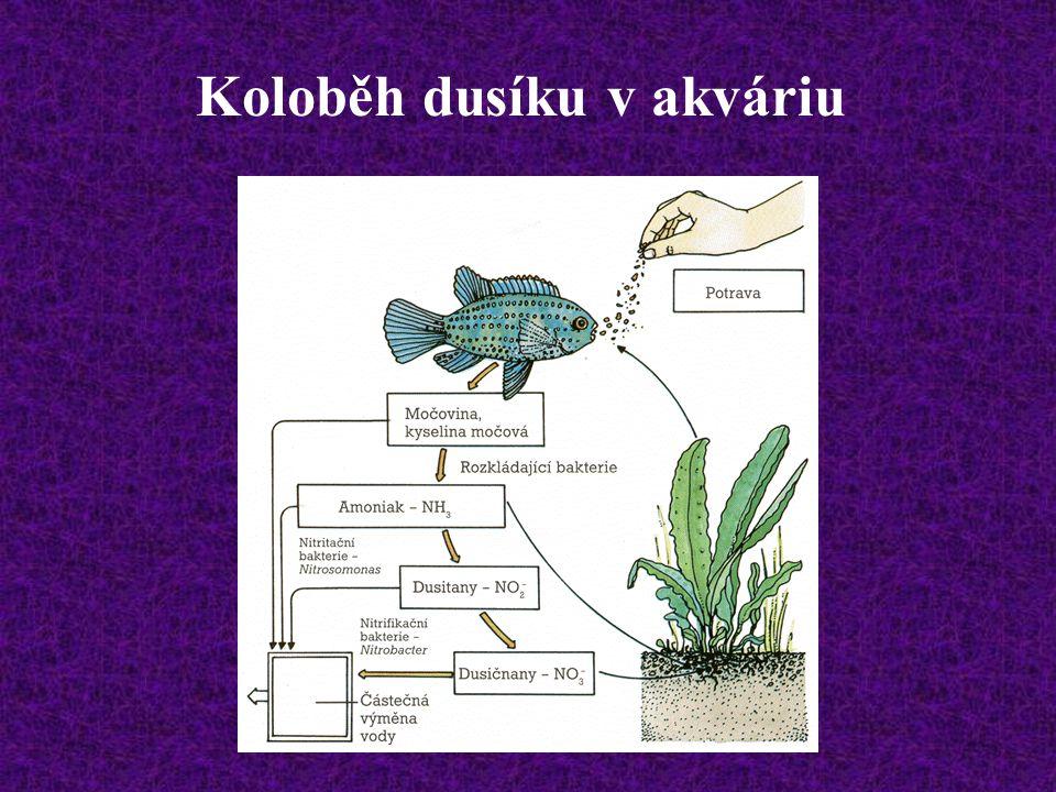 DENITRIFIKACE je proces, při kterém v anaerobních podmínkách (bez přístupu kyslíku) bakterie redukují dusičnany a dusitany na plynný dusík nebo jeho o