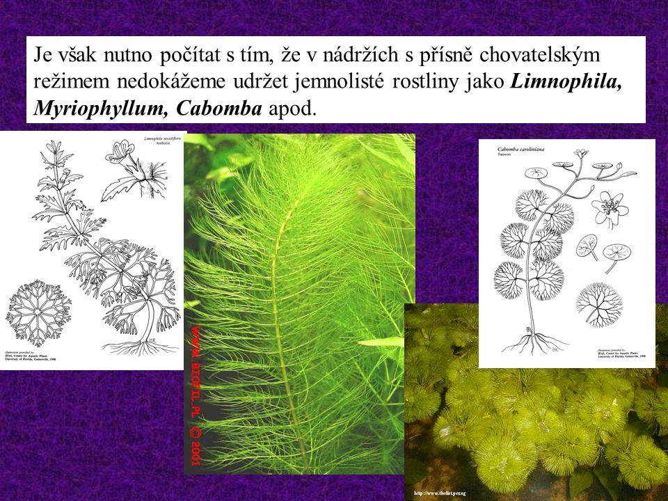 Je však nutno počítat s tím, že v nádržích s přísně chovatelským režimem nedokážeme udržet jemnolisté rostliny jako Limnophila, Myriophyllum, Cabomba apod.