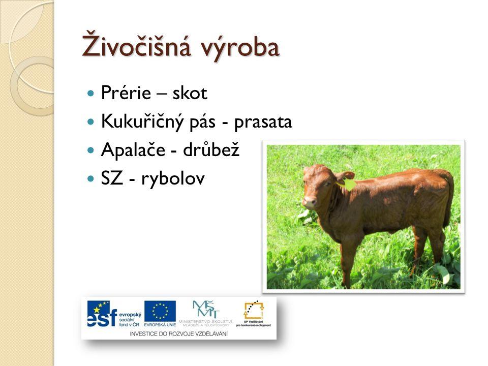Živočišná výroba Prérie – skot Kukuřičný pás - prasata Apalače - drůbež SZ - rybolov