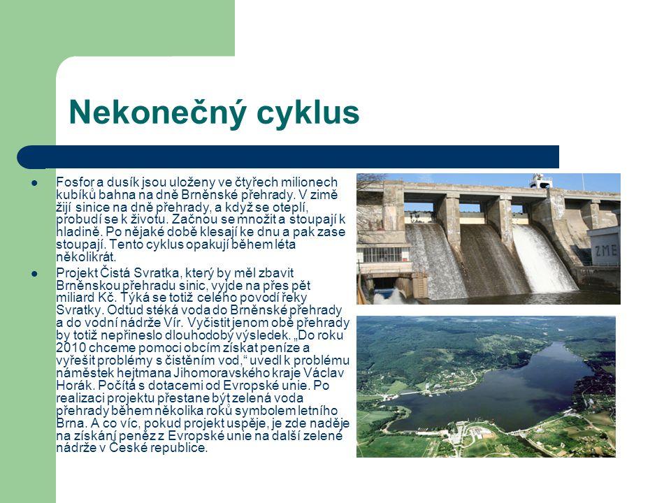 Nekonečný cyklus Fosfor a dusík jsou uloženy ve čtyřech milionech kubíků bahna na dně Brněnské přehrady. V zimě žijí sinice na dně přehrady, a když se