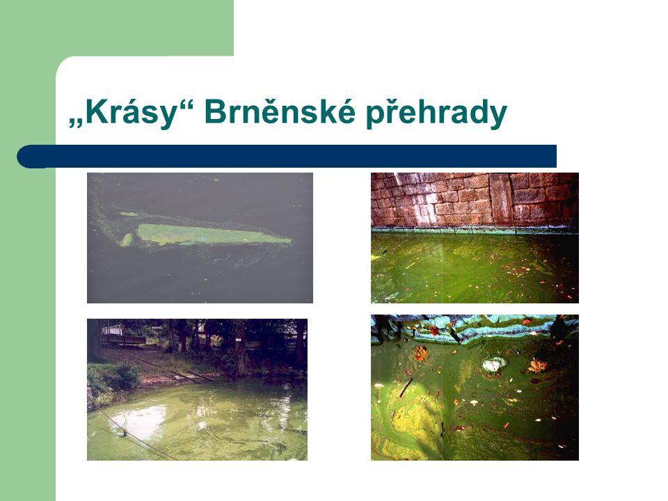 """""""Krásy"""" Brněnské přehrady"""