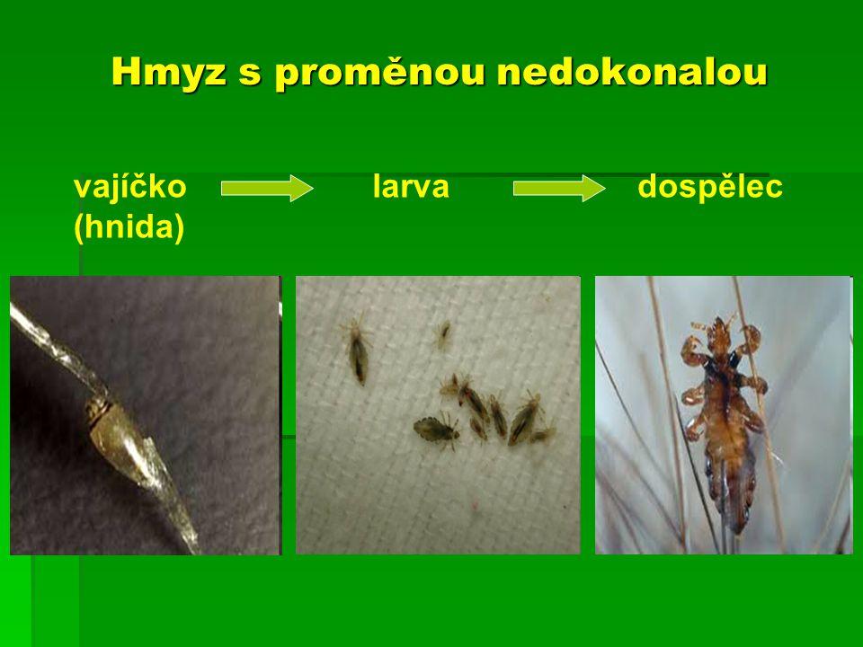 Hmyz s proměnou nedokonalou vajíčko (hnida) larvadospělec