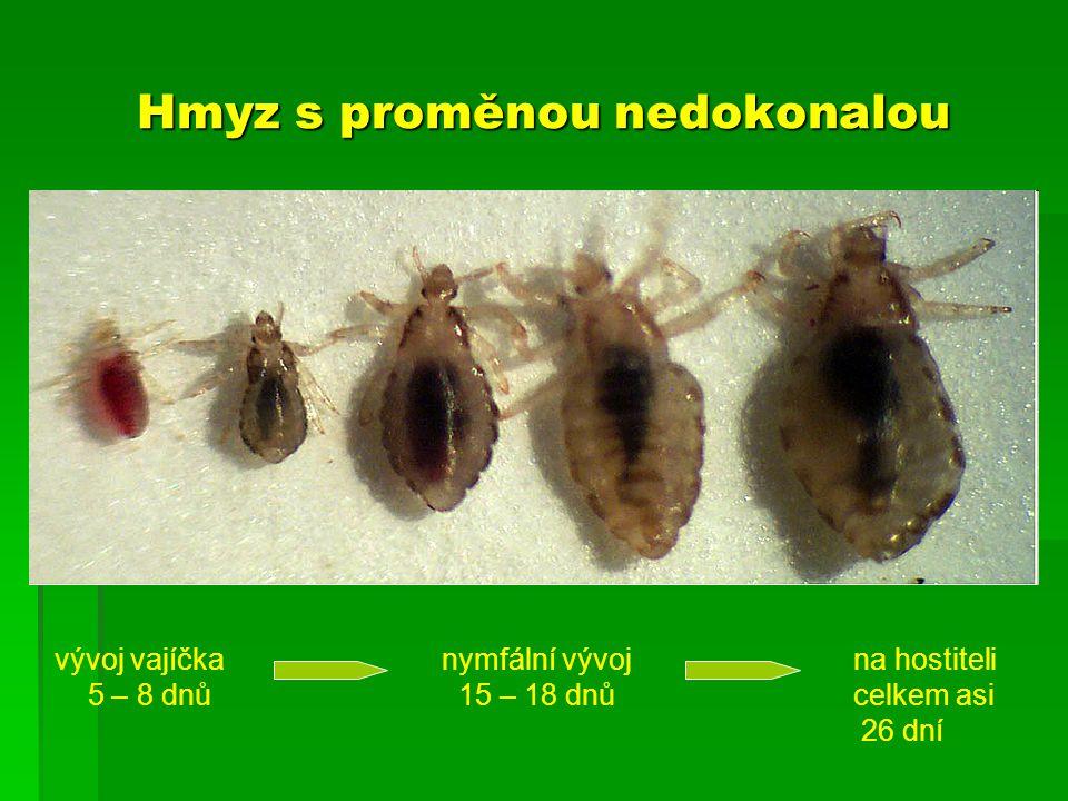 Hmyz s proměnou nedokonalou vývoj vajíčka 5 – 8 dnů nymfální vývoj 15 – 18 dnů na hostiteli celkem asi 26 dní