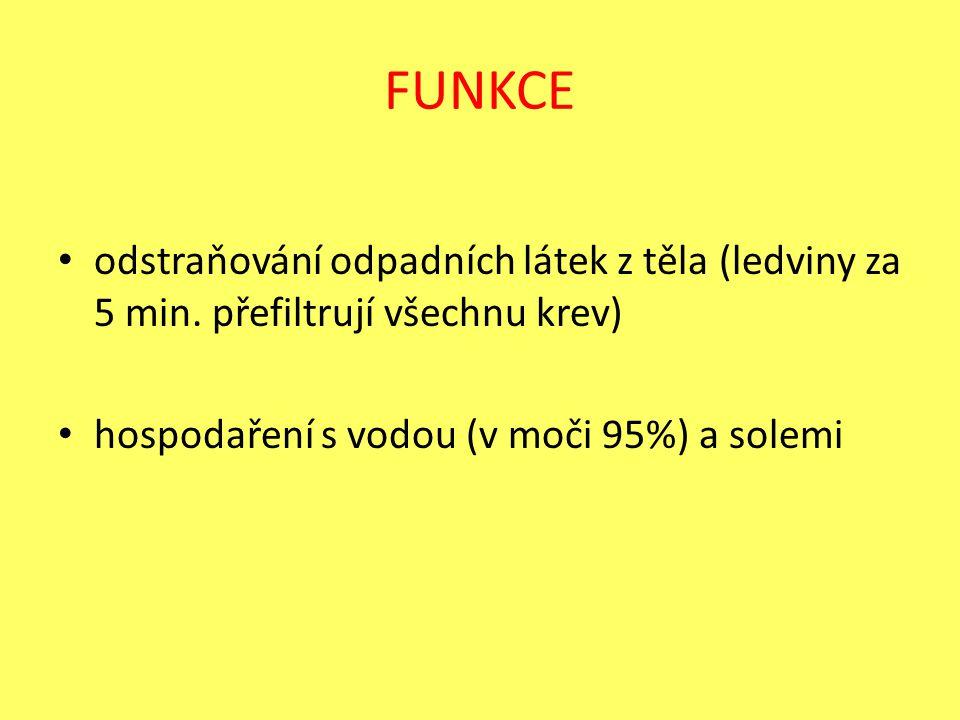 FUNKCE odstraňování odpadních látek z těla (ledviny za 5 min. přefiltrují všechnu krev) hospodaření s vodou (v moči 95%) a solemi