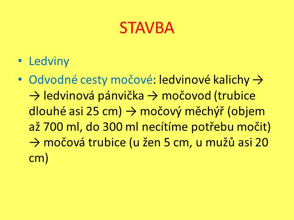 STAVBA Ledviny Odvodné cesty močové: ledvinové kalichy → → ledvinová pánvička → močovod (trubice dlouhé asi 25 cm) → močový měchýř (objem až 700 ml, d