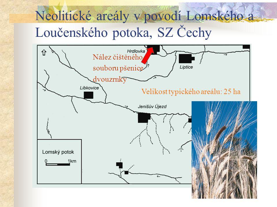 Neolitické areály v povodí Lomského a Loučenského potoka, SZ Čechy Velikost typického areálu: 25 ha Nález čištěného souboru pšenice dvouzrnky