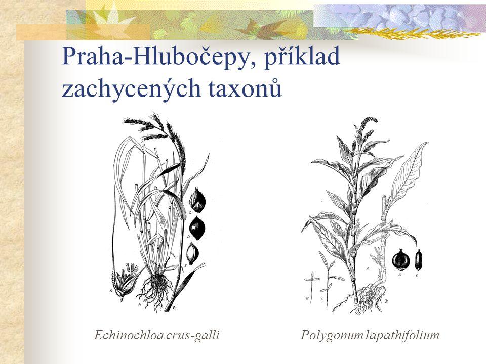 Praha-Hlubočepy, příklad zachycených taxonů Echinochloa crus-galliPolygonum lapathifolium