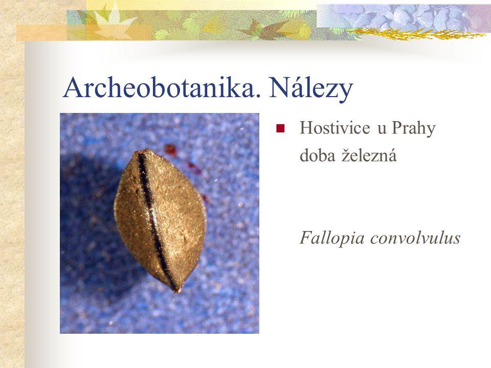 Archeobotanika. Nálezy Hostivice u Prahy doba železná Fallopia convolvulus
