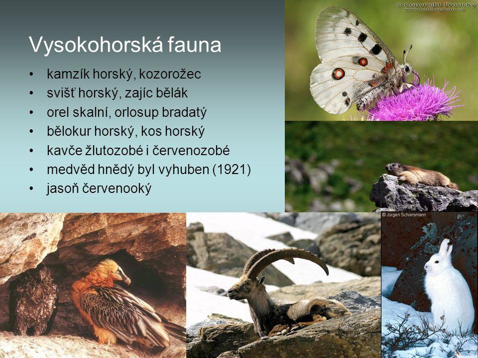 Vysokohorská fauna kamzík horský, kozorožec svišť horský, zajíc bělák orel skalní, orlosup bradatý bělokur horský, kos horský kavče žlutozobé i červen