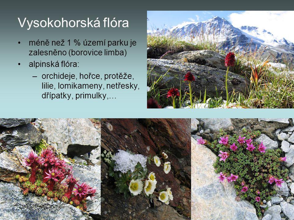 Vysokohorská flóra méně než 1 % území parku je zalesněno (borovice limba) alpinská flóra: –orchideje, hořce, protěže, lilie, lomikameny, netřesky, dří