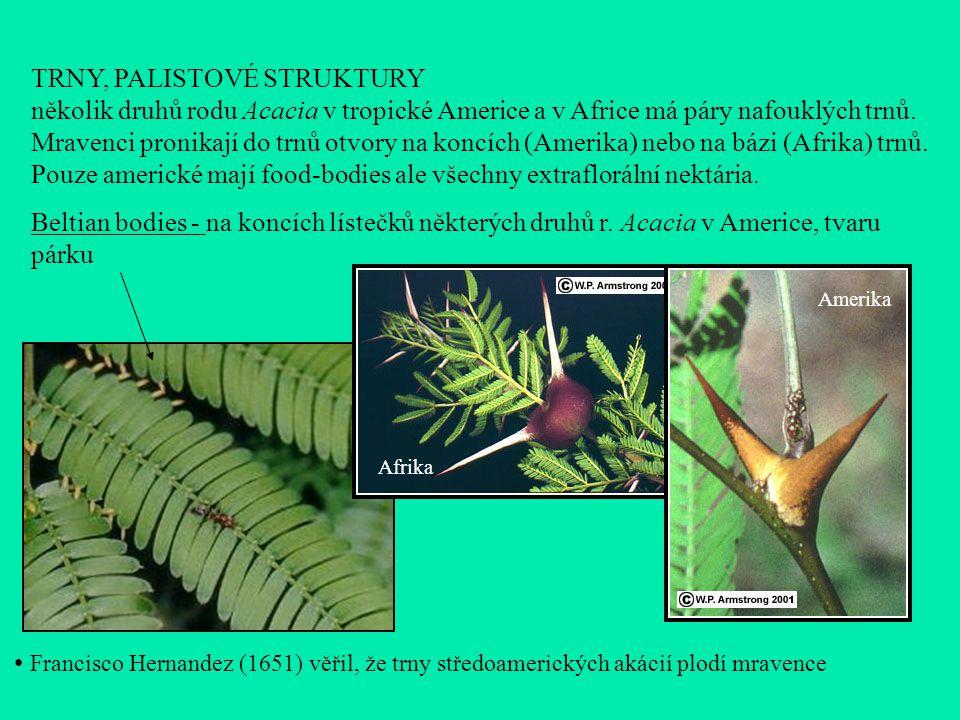 TRNY, PALISTOVÉ STRUKTURY několik druhů rodu Acacia v tropické Americe a v Africe má páry nafouklých trnů.