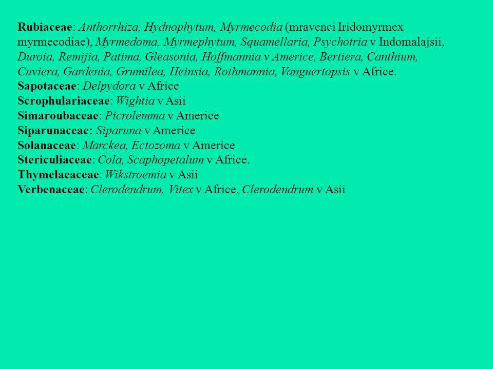 Rubiaceae: Anthorrhiza, Hydnophytum, Myrmecodia (mravenci Iridomyrmex myrmecodiae), Myrmedoma, Myrmephytum, Squamellaria, Psychotria v Indomalajsii, Duroia, Remijia, Patima, Gleasonia, Hoffmannia v Americe, Bertiera, Canthium, Cuviera, Gardenia, Grumilea, Heinsia, Rothmannia, Vanguertopsis v Africe.