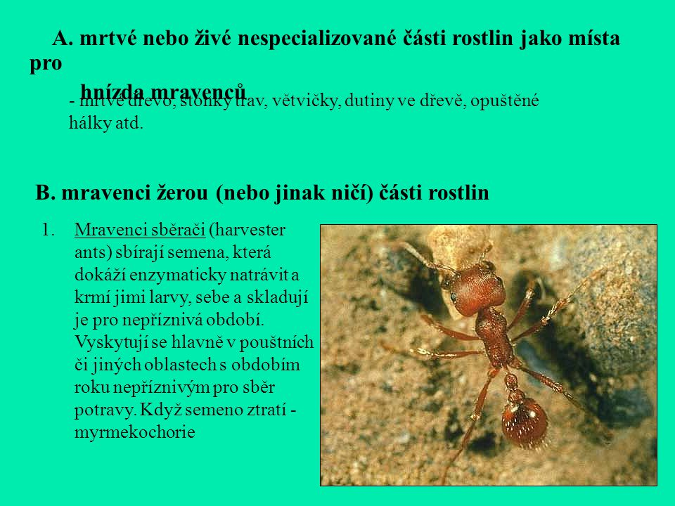2.Mravenci Atta a spol.