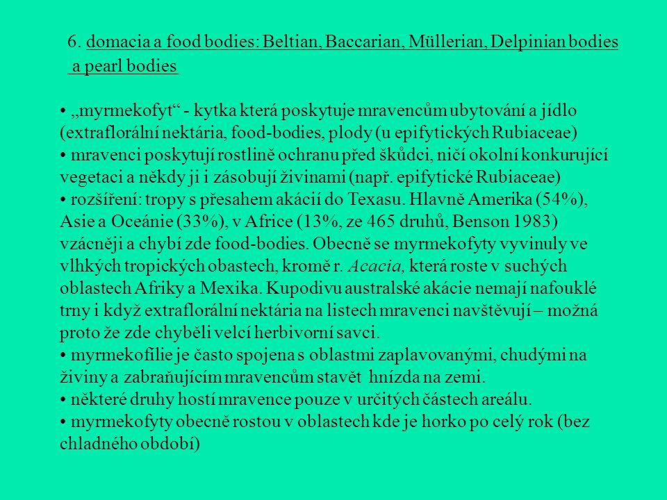 """6. domacia a food bodies: Beltian, Baccarian, Müllerian, Delpinian bodies a pearl bodies """"myrmekofyt"""" - kytka která poskytuje mravencům ubytování a jí"""