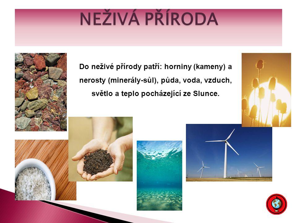 NEŽIVÁ PŘÍRODA Do neživé přírody patří: horniny (kameny) a nerosty (minerály-sůl), půda, voda, vzduch, světlo a teplo pocházející ze Slunce.