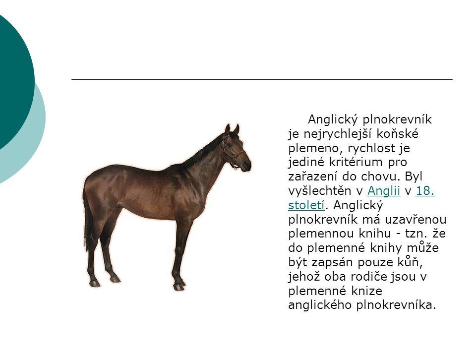 Popis  Anglický plnokrevník je kůň vysoký, štíhlý s dlouhým, mírně klenutým, nízko nasazeným krkem, výrazným kohoutkem, nezbytný je dlouhý a široký hrudník.
