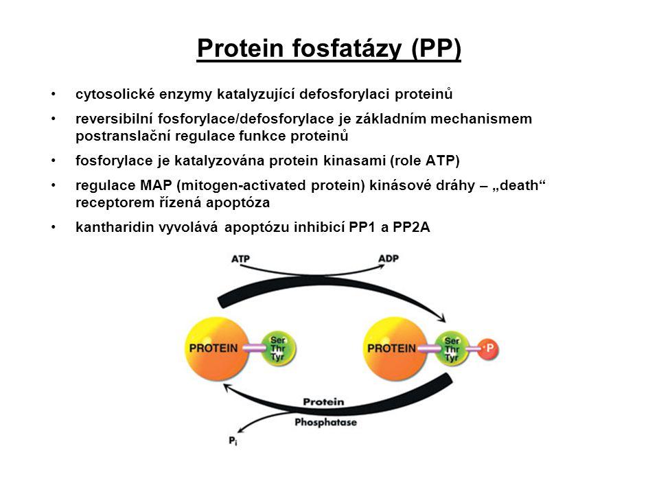 Protein fosfatázy (PP) cytosolické enzymy katalyzující defosforylaci proteinů reversibilní fosforylace/defosforylace je základním mechanismem postrans