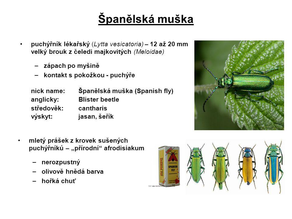 Španělská muška puchýřník lékařský (Lytta vesicatoria) – 12 až 20 mm velký brouk z čeledi majkovitých (Meloidae) –zápach po myšině –kontakt s pokožkou