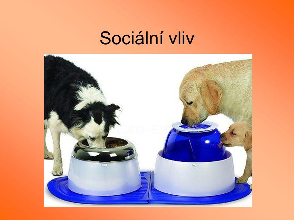 Sociální vliv