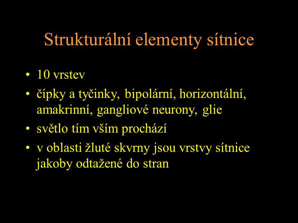 Strukturální elementy sítnice 10 vrstev čípky a tyčinky, bipolární, horizontální, amakrinní, gangliové neurony, glie světlo tím vším prochází v oblasti žluté skvrny jsou vrstvy sítnice jakoby odtažené do stran