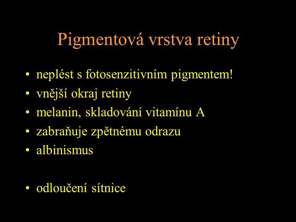 Pigmentová vrstva retiny neplést s fotosenzitivním pigmentem! vnější okraj retiny melanin, skladování vitamínu A zabraňuje zpětnému odrazu albinismus