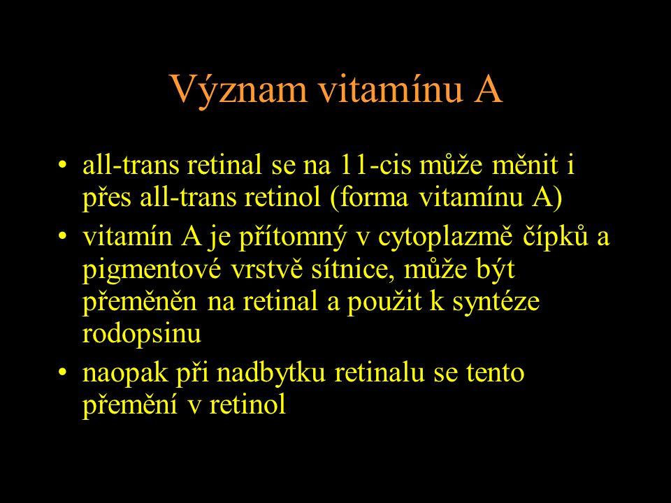 Význam vitamínu A all-trans retinal se na 11-cis může měnit i přes all-trans retinol (forma vitamínu A) vitamín A je přítomný v cytoplazmě čípků a pigmentové vrstvě sítnice, může být přeměněn na retinal a použit k syntéze rodopsinu naopak při nadbytku retinalu se tento přemění v retinol