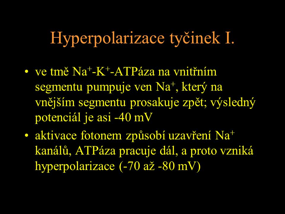 Hyperpolarizace tyčinek I. ve tmě Na + -K + -ATPáza na vnitřním segmentu pumpuje ven Na +, který na vnějším segmentu prosakuje zpět; výsledný potenciá