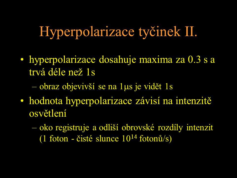 Hyperpolarizace tyčinek II. hyperpolarizace dosahuje maxima za 0.3 s a trvá déle než 1s –obraz objevivší se na 1  s je vidět 1s hodnota hyperpolariza