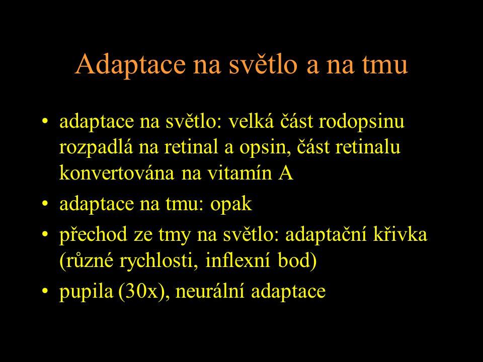 Adaptace na světlo a na tmu adaptace na světlo: velká část rodopsinu rozpadlá na retinal a opsin, část retinalu konvertována na vitamín A adaptace na tmu: opak přechod ze tmy na světlo: adaptační křivka (různé rychlosti, inflexní bod) pupila (30x), neurální adaptace