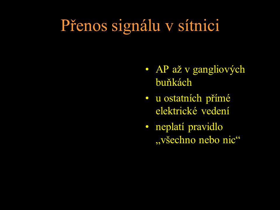 """Přenos signálu v sítnici AP až v gangliových buňkách u ostatních přímé elektrické vedení neplatí pravidlo """"všechno nebo nic"""