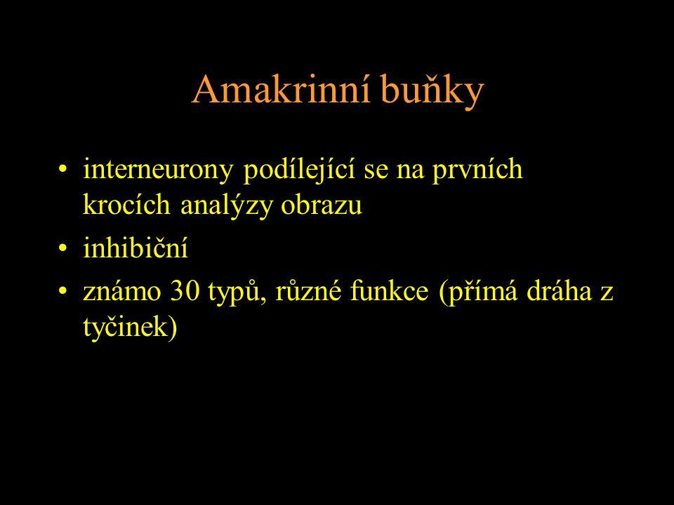 Amakrinní buňky interneurony podílející se na prvních krocích analýzy obrazu inhibiční známo 30 typů, různé funkce (přímá dráha z tyčinek)