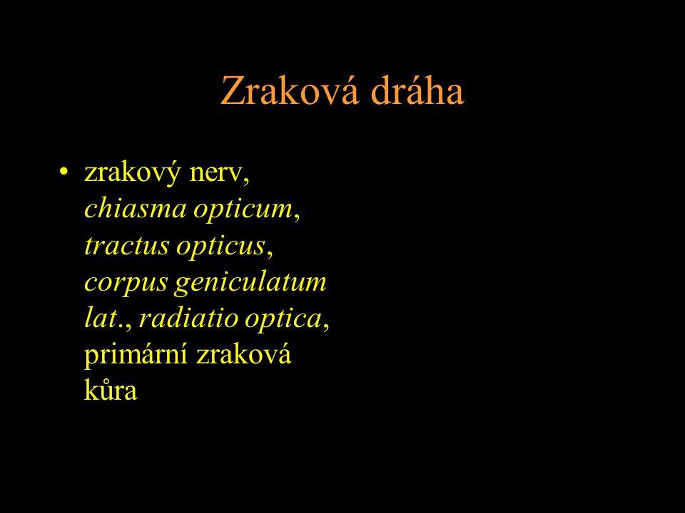 Zraková dráha zrakový nerv, chiasma opticum, tractus opticus, corpus geniculatum lat., radiatio optica, primární zraková kůra