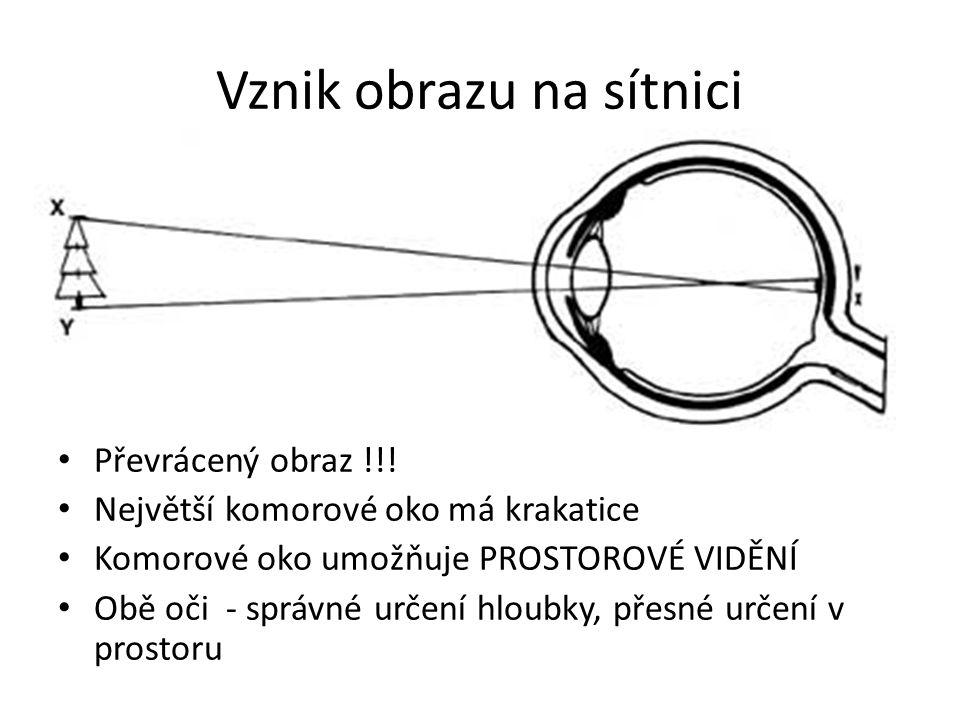 Vznik obrazu na sítnici Převrácený obraz !!! Největší komorové oko má krakatice Komorové oko umožňuje PROSTOROVÉ VIDĚNÍ Obě oči - správné určení hloub