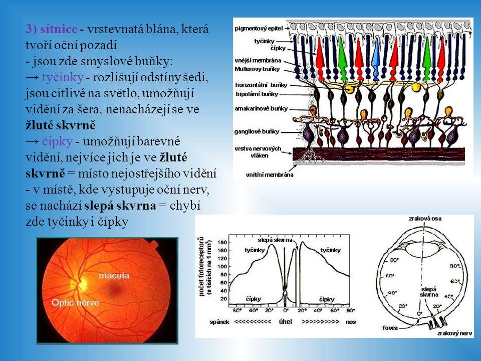 Čočka - 4 mm silná, 10 mm v průměru - zavěšena na řasnatém tělísku - je průhledná, dvojvypuklá s více zakřivenou zadní plochou - její funkcí je lámat paprsky tak, aby se sbíhaly na sítnici na žluté skvrně, k tomu dochází vlivem akomodace = zploštění či vyklenutí čočky Sklivec - rosolovitá průhledná hmota vyplňující vnitřek oka