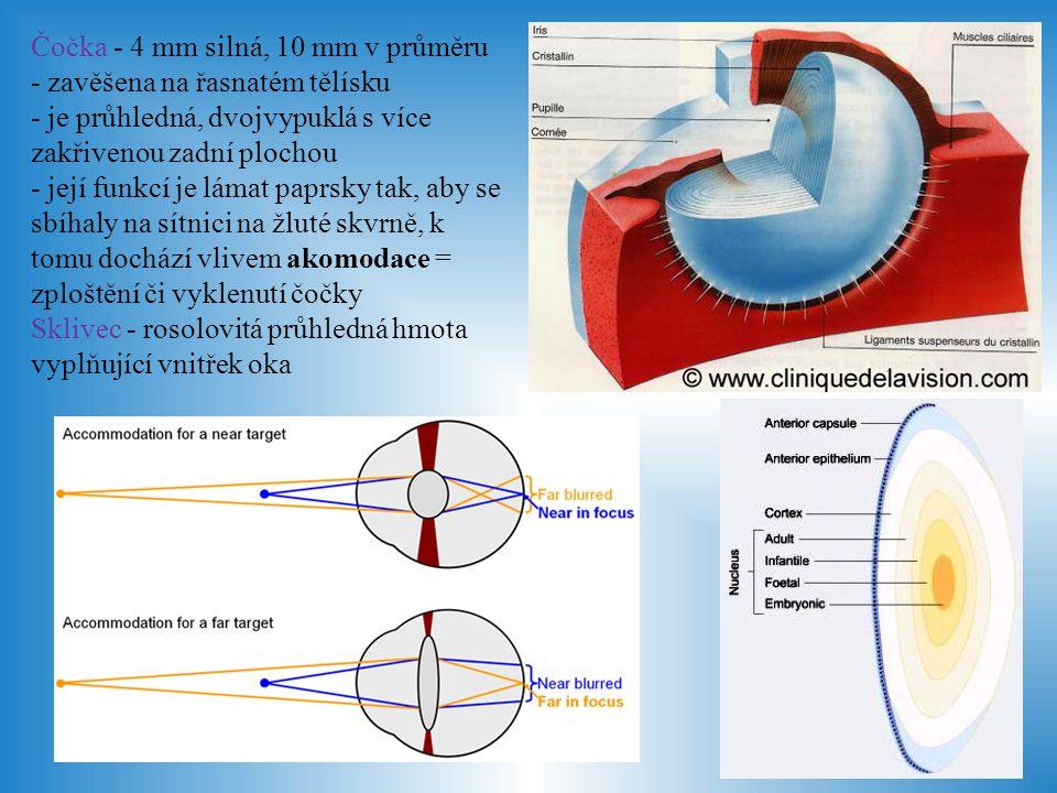 Přídatné orgány Spojivka - slizniční blána pokrývající bělimu - ohybem přechází na oční víčka a vytváří tak spojivkový vak - má funkci ochrannou (mechanicky, sídlo imunitních buněk), sekreční (produkce hlenu), usnadňuje pohyb oka Slzní aparát - slzná žláza - uložena nad okem - produkuje slzy, které jsou pohybem víček roztírány po oku - slzy obsahují chlorid sodný a některé bílkoviny - mají za úkol omývat rohovku a vyživovat ji, vymývají spojivkový vak, jsou antibakteriální - slzy jsou odváděny do slzného kanálku na vnitřní straně oka a do nosní dutiny