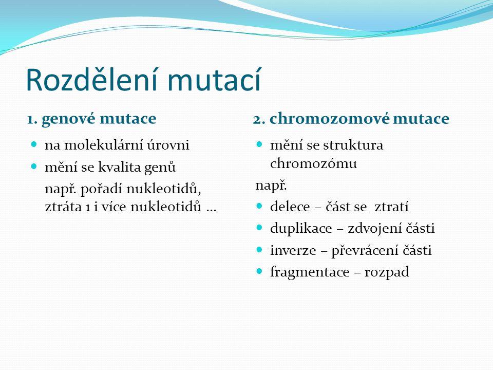 Rozdělení mutací 1. genové mutace 2. chromozomové mutace na molekulární úrovni mění se kvalita genů např. pořadí nukleotidů, ztráta 1 i více nukleotid