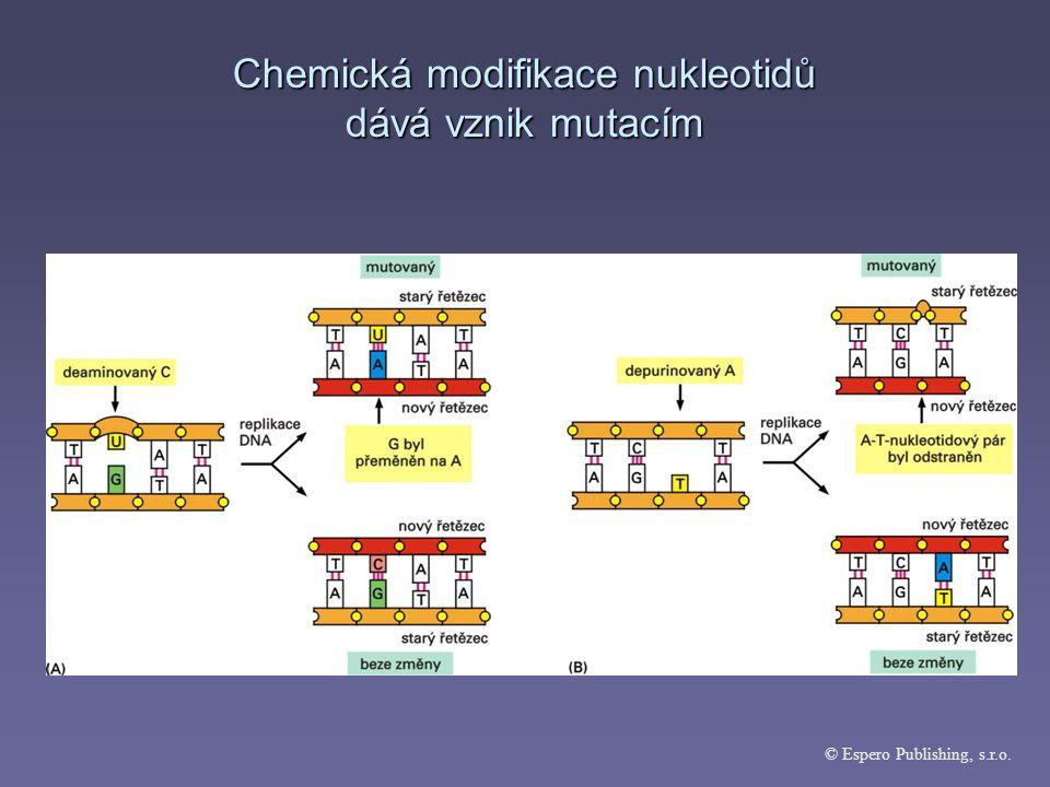 Chromozomové mutace = aberace aberace  mění strukturu chromozomů  rozpad chromozomu (fragmentace)  zdvojení části chromozomů (duplikace)  ztráta části chromozómu (delece)  převrácení úseku chromozómu (inverze)  připojení části chromozómu na jiný chromozóm (translokace)  lze pozorovat mikroskopem  člověk – 6% gamet s chromozómovými mutacemi (zygoty hned zaniknou)