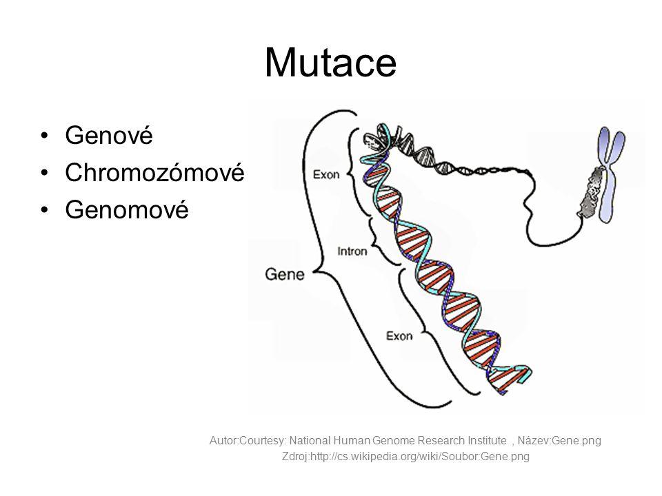 Mutace Genové Chromozómové Genomové Autor:Courtesy: National Human Genome Research Institute, Název:Gene.png Zdroj:http://cs.wikipedia.org/wiki/Soubor
