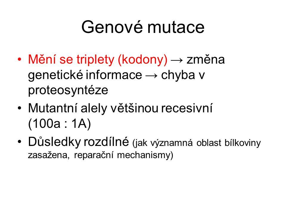 Genové mutace Mění se triplety (kodony) → změna genetické informace → chyba v proteosyntéze Mutantní alely většinou recesivní (100a : 1A) Důsledky roz