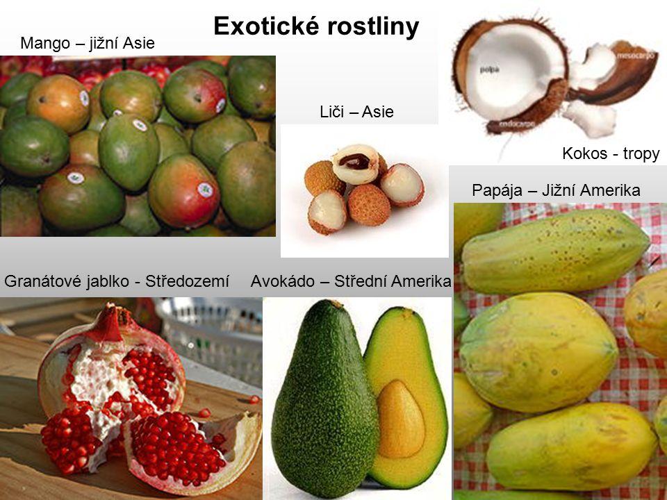 Exotické rostliny Papája – Jižní Amerika Mango – jižní Asie Kokos - tropy Granátové jablko - StředozemíAvokádo – Střední Amerika Liči – Asie