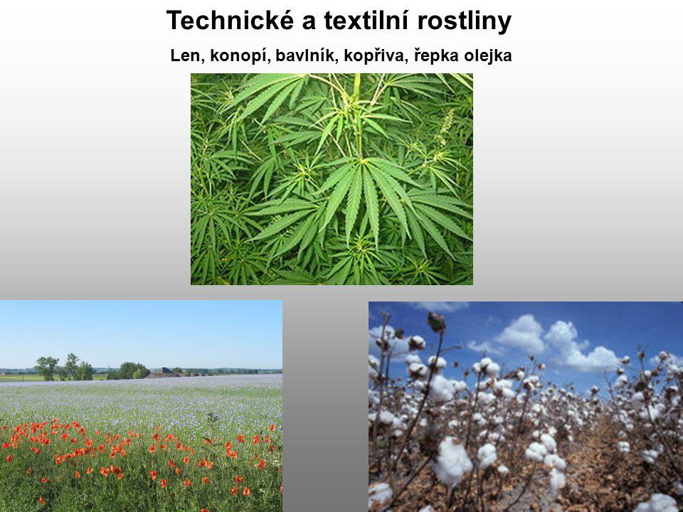 Technické a textilní rostliny Len, konopí, bavlník, kopřiva, řepka olejka