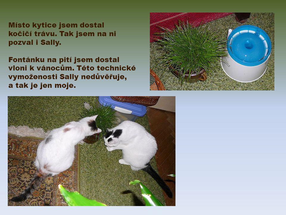 Místo kytice jsem dostal kočičí trávu. Tak jsem na ni pozval i Sally.