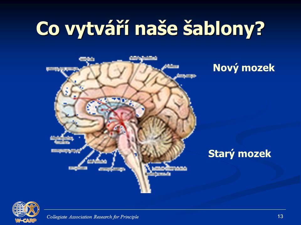 13 Co vytváří naše šablony? Collegiate Association Research for Principle Nový mozek Starý mozek