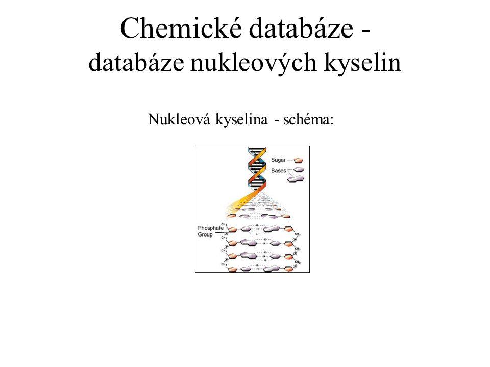 Chemické databáze - databáze nukleových kyselin Nukleová kyselina - schéma:
