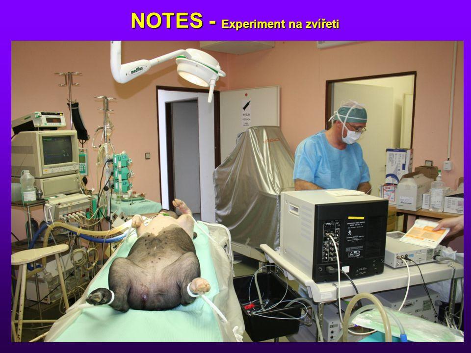 NOTES - Experiment na zvířeti NOTES - Experiment na zvířeti