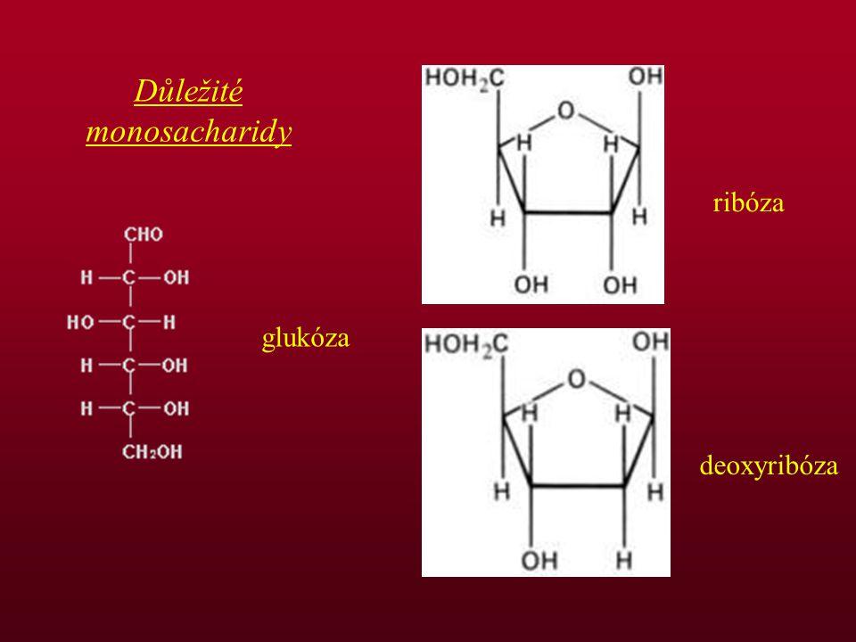 glukóza ribóza deoxyribóza Důležité monosacharidy