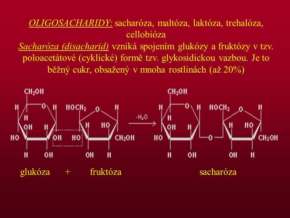 OLIGOSACHARIDY: sacharóza, maltóza, laktóza, trehalóza, cellobióza Sacharóza (disacharid) vzniká spojením glukózy a fruktózy v tzv. poloacetátové (cyk