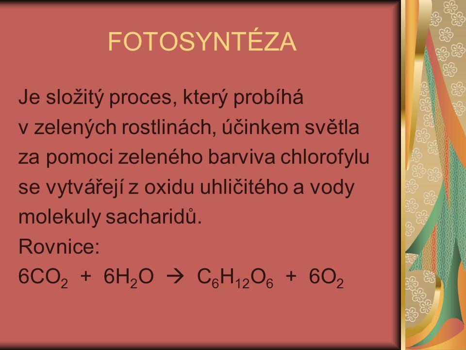FOTOSYNTÉZA Je složitý proces, který probíhá v zelených rostlinách, účinkem světla za pomoci zeleného barviva chlorofylu se vytvářejí z oxidu uhličitého a vody molekuly sacharidů.